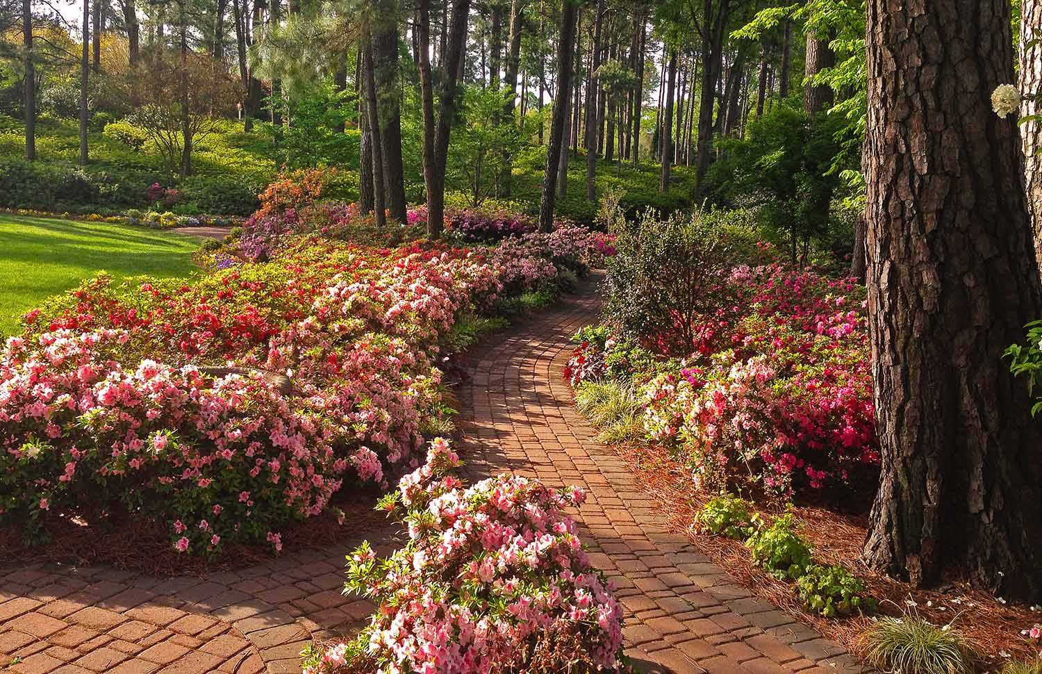 About – WRAL Gardens
