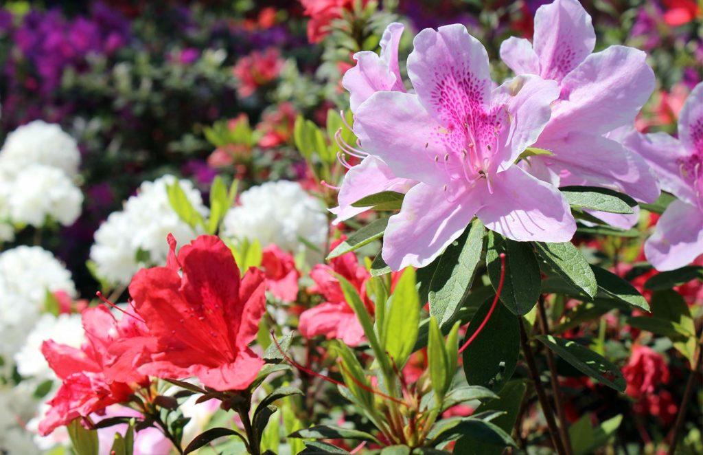 Redorange-and-Pink