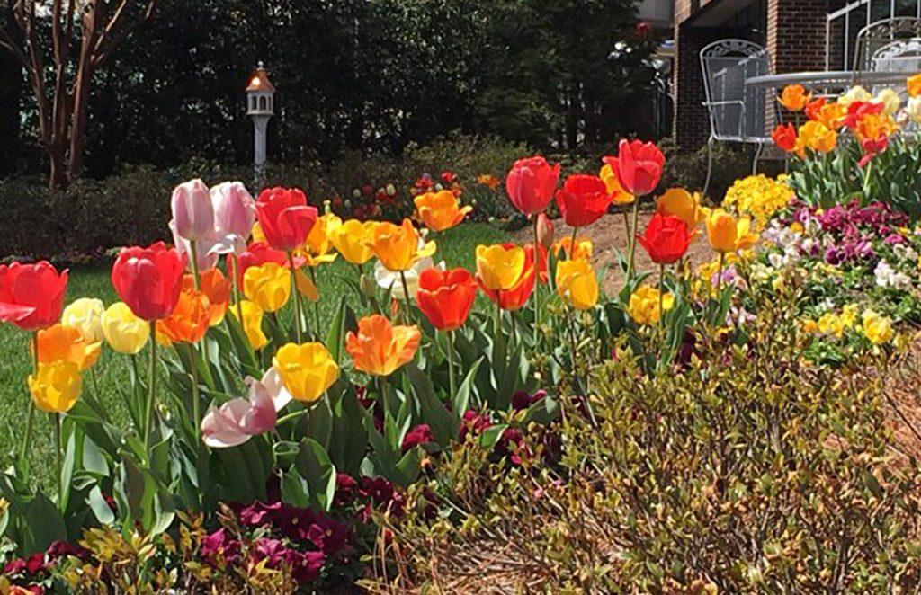 Tulips-and-birdhouse